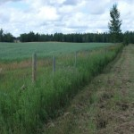 Beautiful 19 acres of pristine land for acreage and/or farm